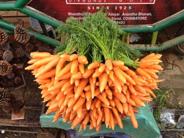 bunch_of_carrot